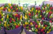 Тюльпаны свежие оптом и в розницу к 8 марта.