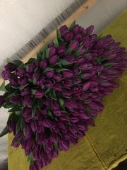 Элитные тюльпаны от производителя
