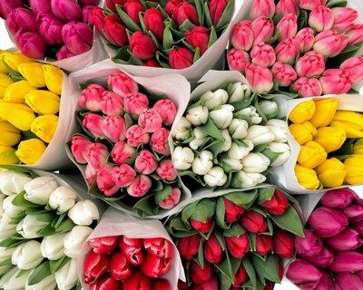 Голландские тюльпаны. - main