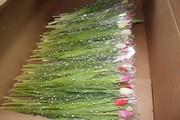 Шикарные букеты из тюльпанов к 8 Марта под заказ - foto 1