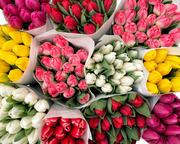 Шикарные букеты из тюльпанов к 8 Марта под заказ - foto 2