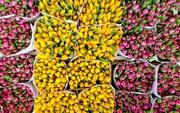 Тюльпаны Экстра класса,  выгодное предложение - foto 2