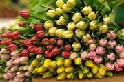 Тюльпаны в ассортименте оптом и в розницу. - foto 0