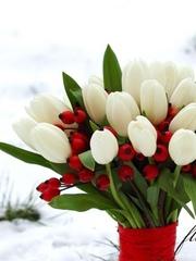 Тюльпаны нежные весенние цветы оптом в Минске