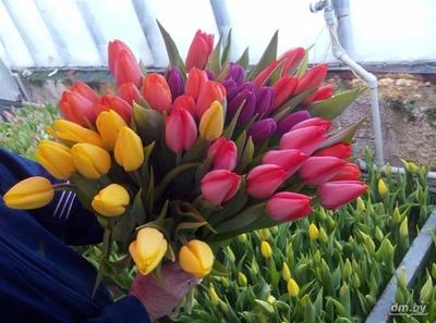Тюльпаны в ассортименте оптом и в розницу. - main